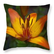 Variegated Lily Throw Pillow