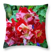 Variegated Multicolored English Roses Throw Pillow