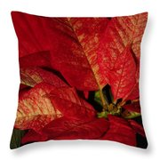 Variegated Poinsettia II Throw Pillow
