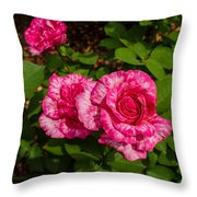 Variegated Roses Throw Pillow