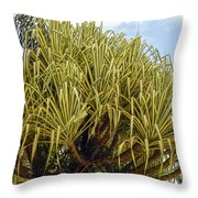 Variegated Screw Pine Throw Pillow