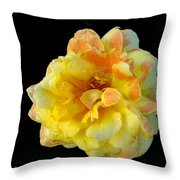 Variegated Yellow Rose Throw Pillow