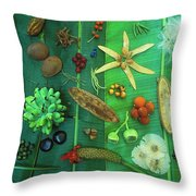 Variety Of Seeds And Fruits Throw Pillow