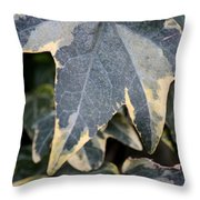 Varigated Ivy Leaves Throw Pillow