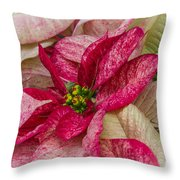 Varigated Poinsettia Throw Pillow