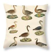 Various Kinds Of Geese Throw Pillow