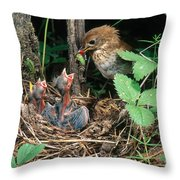 Veery At Nest Throw Pillow
