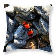 Velvet Ant Throw Pillow