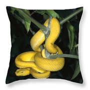 Vemonous Mcgregors Pit Viper Coiled Throw Pillow