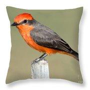 Vermilion Flycatcher Pyrocephalus Throw Pillow
