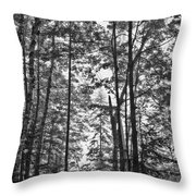 Vermont Forest Sunrise Ricker Pond Black And White Throw Pillow