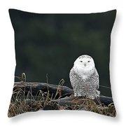 Vermont Snowy Owl Throw Pillow