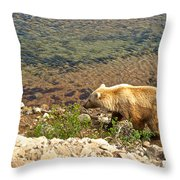 Very Light-colored Grizzly Bear In Moraine River In Katmai Nnp-ak Throw Pillow