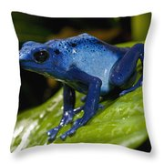 Very Tiny Blue Poison Dart Frog Throw Pillow