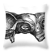 Vesalius: Uterus, 1543 Throw Pillow