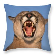 V.hurst Tk21663d, Mountain Lion Growling Throw Pillow by Victoria Hurst