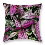 Vibrant Persian Shield II Throw Pillow