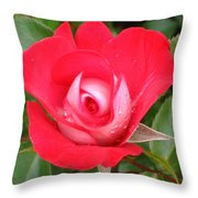 Vibrant Red Rose Throw Pillow