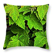 Vibrant Young Maples - Acer Throw Pillow