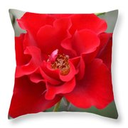 Vibrantly Red Rose Throw Pillow