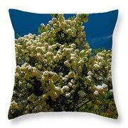 Viburnum Opulus Compactum Bush With White Flowers Throw Pillow