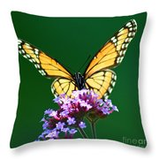 Viceroy Butterfly Square Throw Pillow