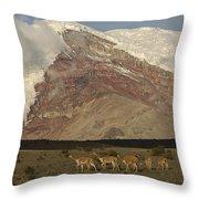 Vicuna Herd Grazing At Mt Chimborazo Throw Pillow