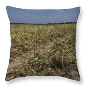Vidalia Georgia Onion Fields Throw Pillow