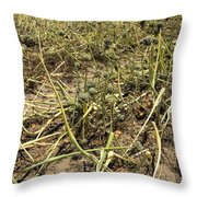Vidalia Onion Seed Field - Georgia Throw Pillow