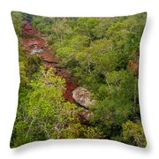 View Of Cano Cristales In Colombia Throw Pillow