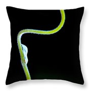 Vine And New Flower Throw Pillow by Bob Orsillo
