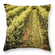 Vines Growing In Vineyard Throw Pillow