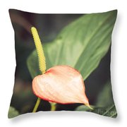 Vintage Anthurium Throw Pillow