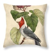 Vintage Bird Study-d Throw Pillow