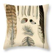 Vintage Feather Study-a Throw Pillow