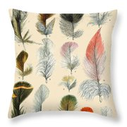 Vintage Feather Study-b Throw Pillow