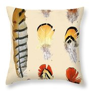 Vintage Feather Study-d Throw Pillow