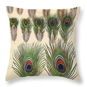 Vintage Feather Study-jp2084 Throw Pillow