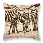 Vintage Zebras Throw Pillow