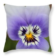 Viola Named Sorbet Marina Baby Face Throw Pillow