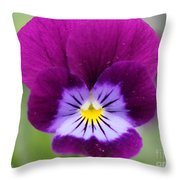 Viola Named Sorbet Plum Velvet Jump-up Throw Pillow