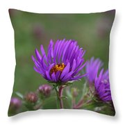 Violet Breeze Throw Pillow