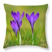 Trio Of Violet Crocuses Throw Pillow