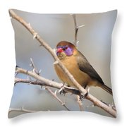 Violet Eared Waxbill Female Throw Pillow