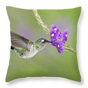 Violet-headed Hummingbird Throw Pillow