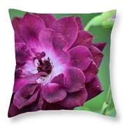 Violet Rose And Buds Throw Pillow