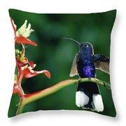 Violet Sabre-wing Hummingbird Throw Pillow