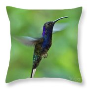 Violet Sabrewing Hummingbird Throw Pillow