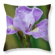 Violet Siberian Iris Throw Pillow
