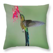Violet-tailed Sylph Hummingbird Feeding Throw Pillow